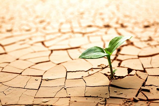 ひび割れた大地から芽吹く新芽