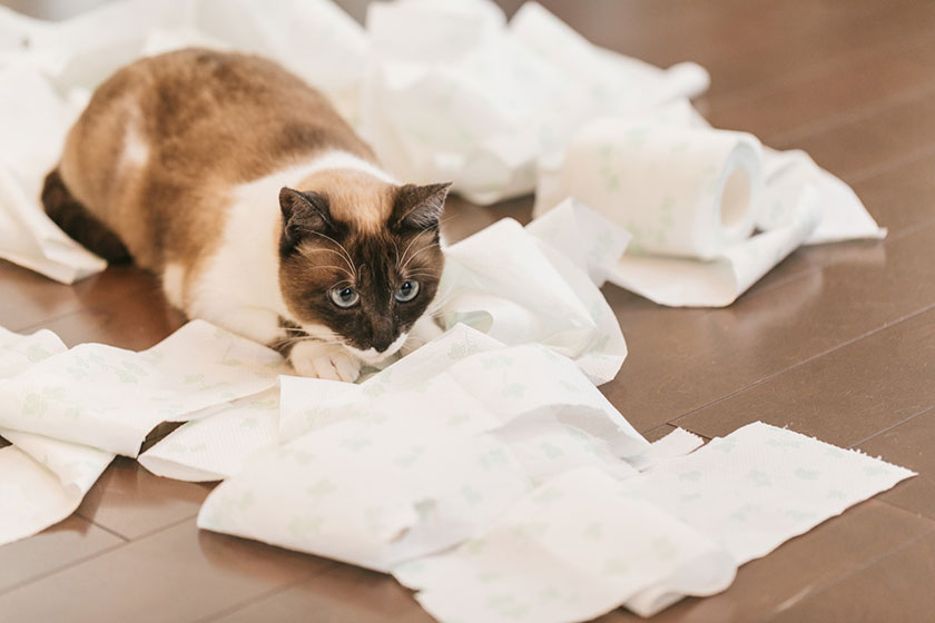 ティッシュをいたずらでグシャグシャにする猫
