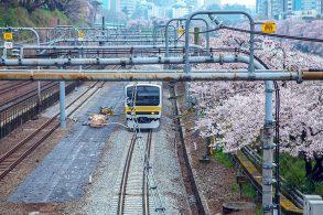桜の下を走る総武線