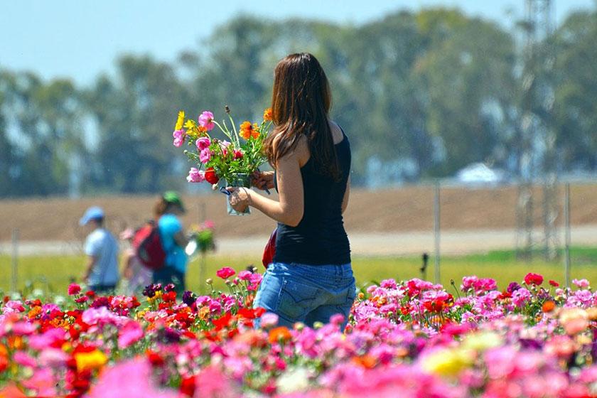 花畑に立つ女性