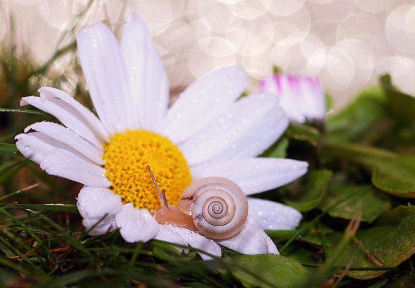 花とかたつむり