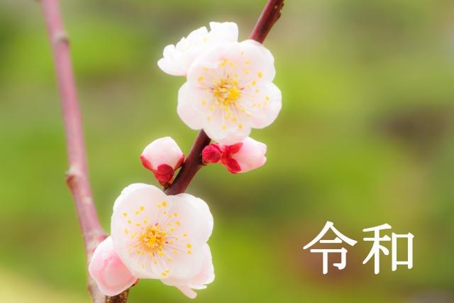 梅の花と令和
