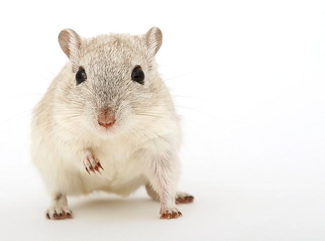 白っぽいマウス